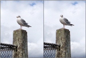 Seagull turn