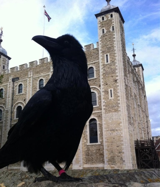 7db435579c48a123356877216720a0da--london--crows-ravens